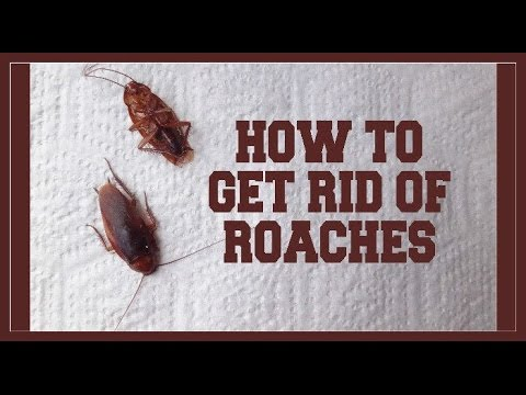 (DIY) How To Get Rid Of  ROACHES!!