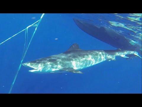How surfboard design may prevent shark attacks