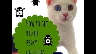 How To Get Rid Of Fleas On Your Cat Simple And Effective