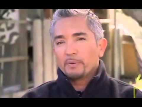 How to handle a Dog fight - Cesar Millan #2