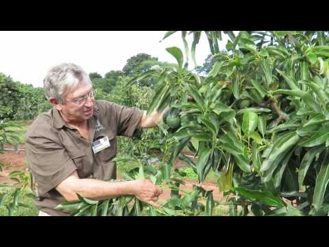 Interview with Andre Ernst of Allesbeste Nursery, South Africa