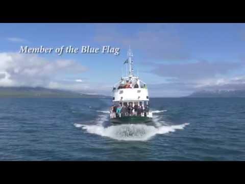 Akureyri Whale Watching in Iceland by Ambassador.