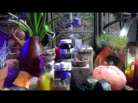 Milk Thistle Seed ~Liver Detoxification, Regeneration, Blood Sugar Metabolizing, Weight Loss