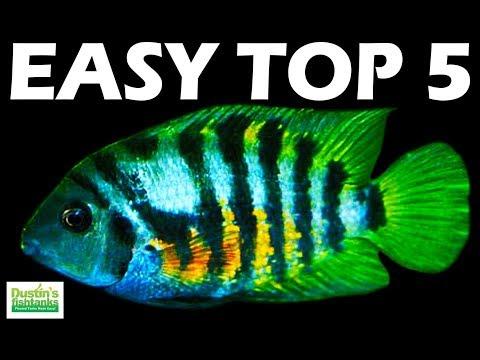 Top 5 BEST BEGINNER AQUARIUM FISH: Happy Mother's Day!