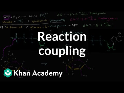 Reaction coupling to create glucose 6 phosphate   Biology   Khan Academy