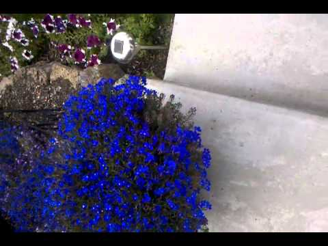 Pincher bugs in my flowers