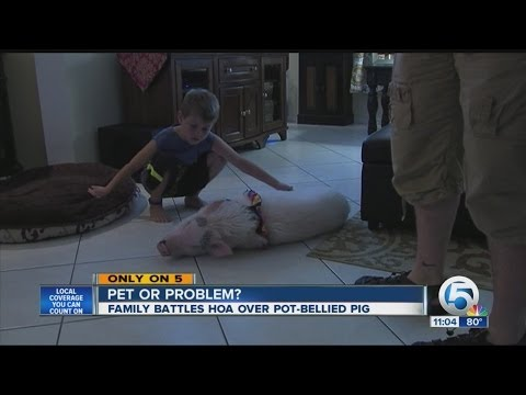 Family battles HOA over pot-bellied pig