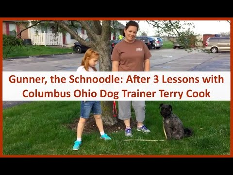 Columbus Ohio Dog Training w/ Terry Cook & Gunner, The Schnoodle: After 3 Dog Training Lessons