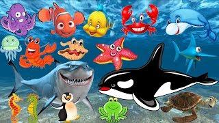 Pelajari nama dan suara hewan laut   Animasi gambar binatang untuk anak-anak: lumba-lumba, hiu, paus