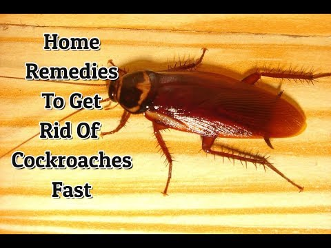 How To Avoid Cockroaches In Kitchen