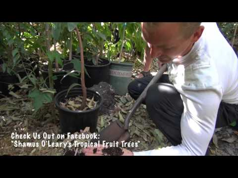 How to build a healthy, living soil to make your fruit trees thrive!