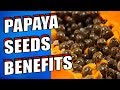 19 Amazing PAPAYA SEEDS Health Benefits For Liver, Gut & Kidneys   Cleanse With Papaya Seeds