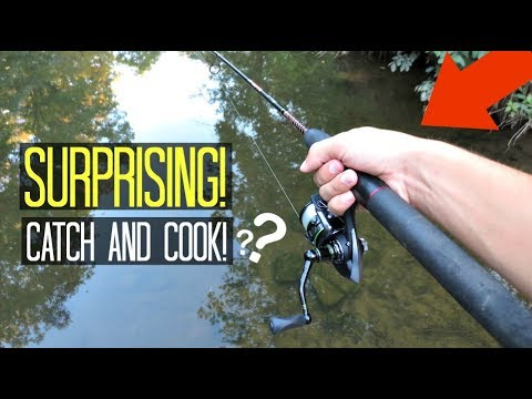 Creek Fishing! Unexpected CATCH AND COOK!! (Surprising!)