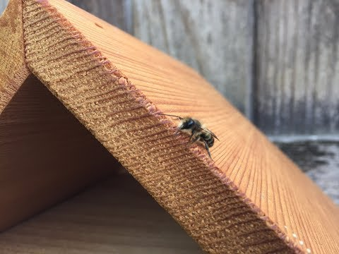 Putting out my Mason Bees:)
