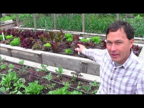 How You Can Garden if You're 16 with No Money & More Organic Gardening Q&A