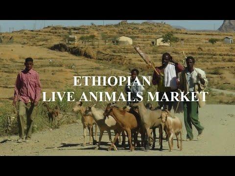 Ethiopia/ Lalibela live animals market  Part 29