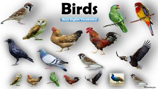 birds name Videos - 9tube tv