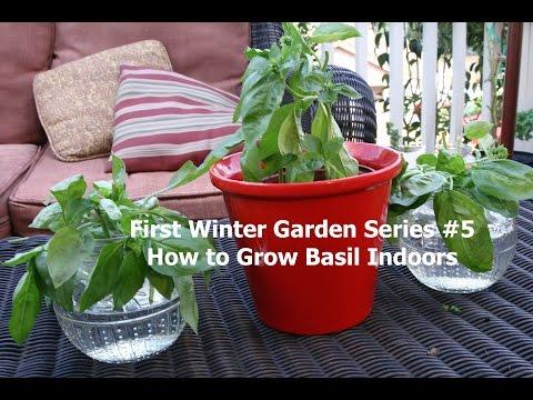 First Winter Garden Series #5: How to Grow Basil Indoors