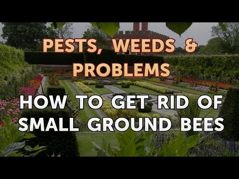 How to Get Rid of Small Ground Bees