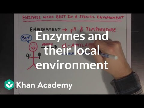 Enzymes and their local environment   MCAT   Khan Academy