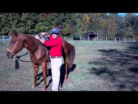 How to Safely Mount a Horse in a Western Saddle
