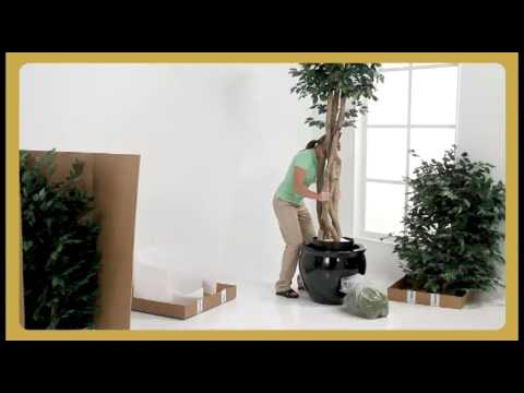 Large Silk Ficus Trees | Commercial Artificial Tree Set-Up | SilkFlowers.com