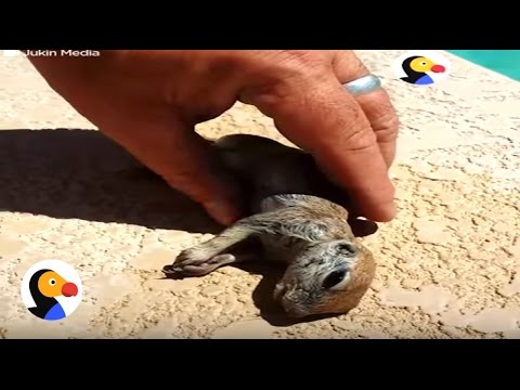 Drowning Prairie Dog Rescued by Guy   The Dodo
