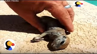 Drowning Prairie Dog Rescued by Guy | The Dodo