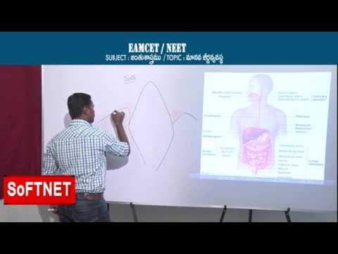 ZOOLOGY || Human Digestive System - P1 || CH.Praveen Kumar