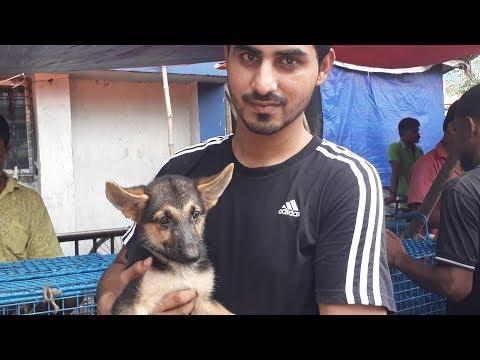 Pet Dog Market Kolkata | Best Place To Buy Pet Dogs | Galiff Street Dog Market | My Bengal