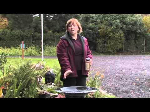 How to Repel House Cats From Outdoor Bird Feeders - eHow.com.flv