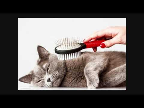 Cat Hairball Problems Learn Why They Happen and How to Help   Cat Care Tips