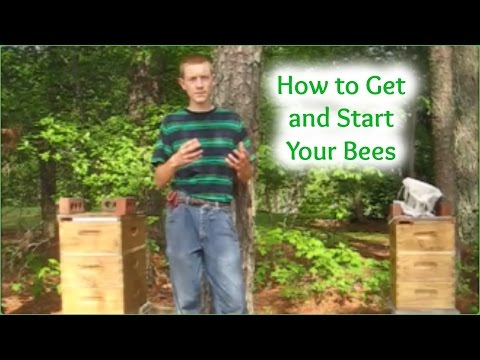 How to Get and Start Your Bees