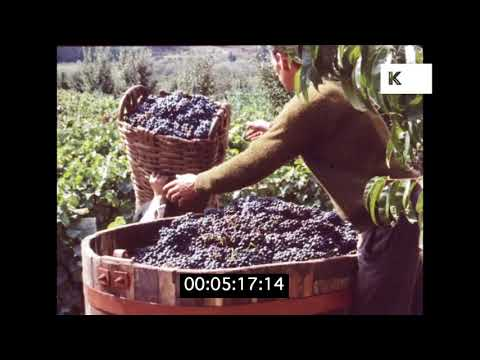 1960s Portugal, Vina Verde Winery, HD from 35mm | Kinolibrary