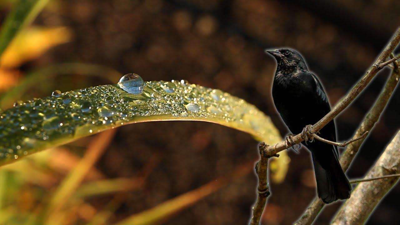"""Música """"Voa Livre"""" (Pássaro Preto) - Juliano Lavarine"""