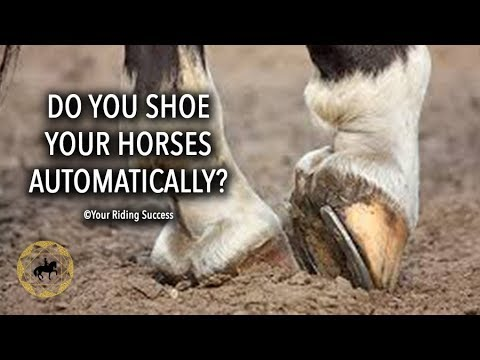 Do You Shoe All Of Your Horses Automatically?  - Weekly Wrap Up 9 May 2018