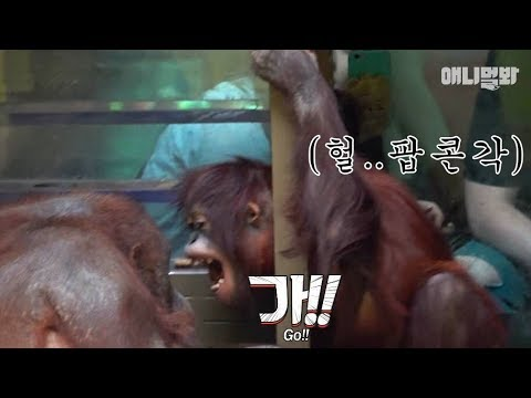 Xxx Mp4 팝콘 챙겨서 들어오세요 ㅣ Baby Orangutan Meets Her Mom For The First Time In 5 Years But 3gp Sex