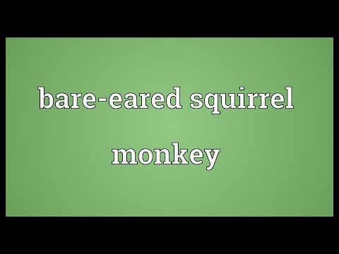 Bare-eared squirrel monkey Meaning