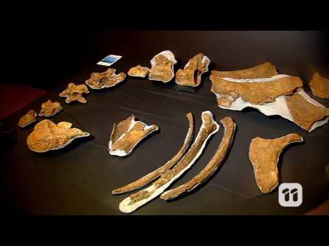 Scope TV: DIY shell fossils