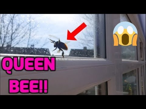 Queen Bee In Our House!