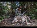 Hunting Bears & Wolves In Idaho mp3