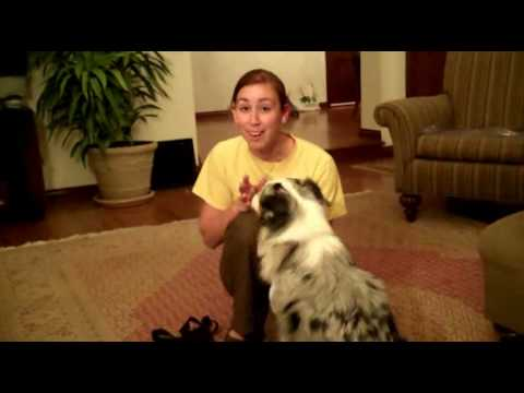 How To Stop Dog From Barking When Doorbell Rings