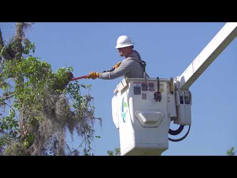 May 2018, 31X31 Duke Energy in Action Month: Bok Tower Gardens
