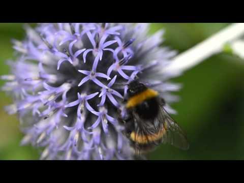 Keeping bumblebee parasites at bay - Peter Graystock