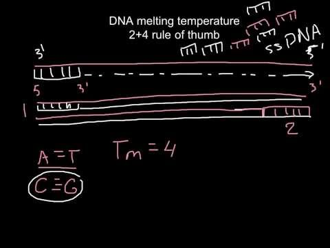 How to calculate melting temperature of DNA