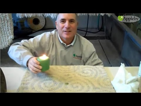 How To Remove Candle Wax From Carpets Or Area Rugs