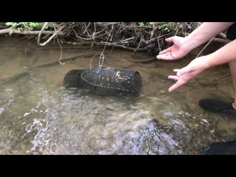 How to Catch Crawfish with a Minnow Trap