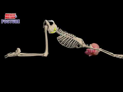 Posture App, Thoracic Extension, Kyphosis Exercises