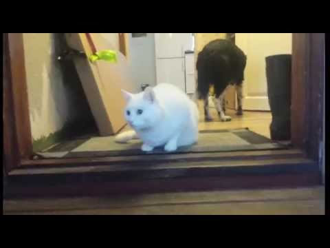 My indoor cats gets a new exercise run!