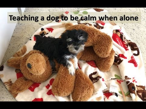 Training a dog to be left alone without crying